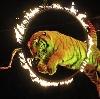 Цирки в Барсуках