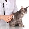Ветеринарные клиники в Барсуках